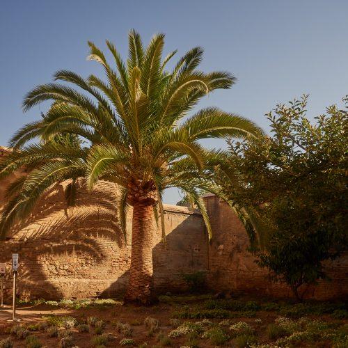 Der Garten des Palacio de Dalahorra