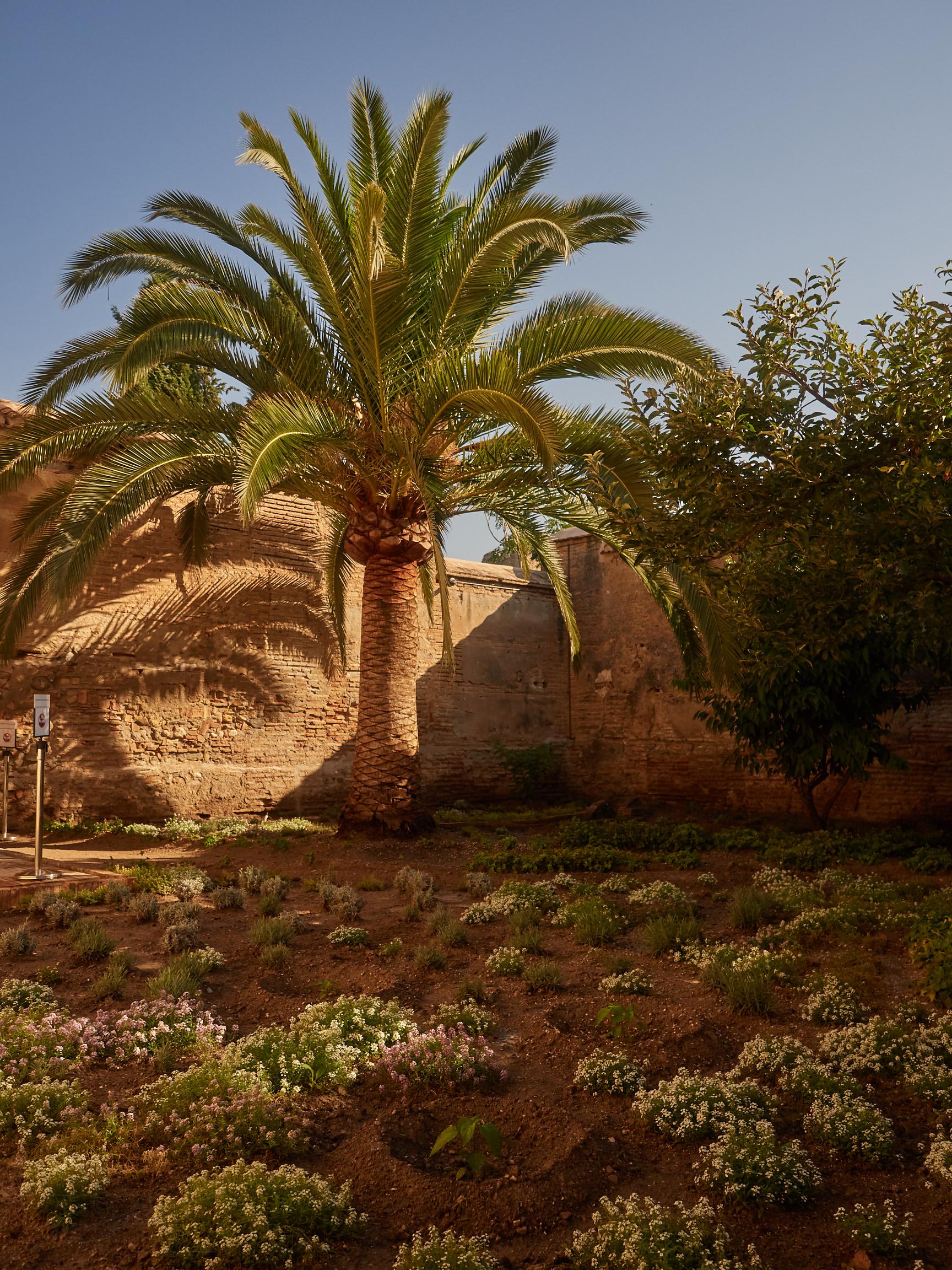 Garten des Palacio de Dalahorra