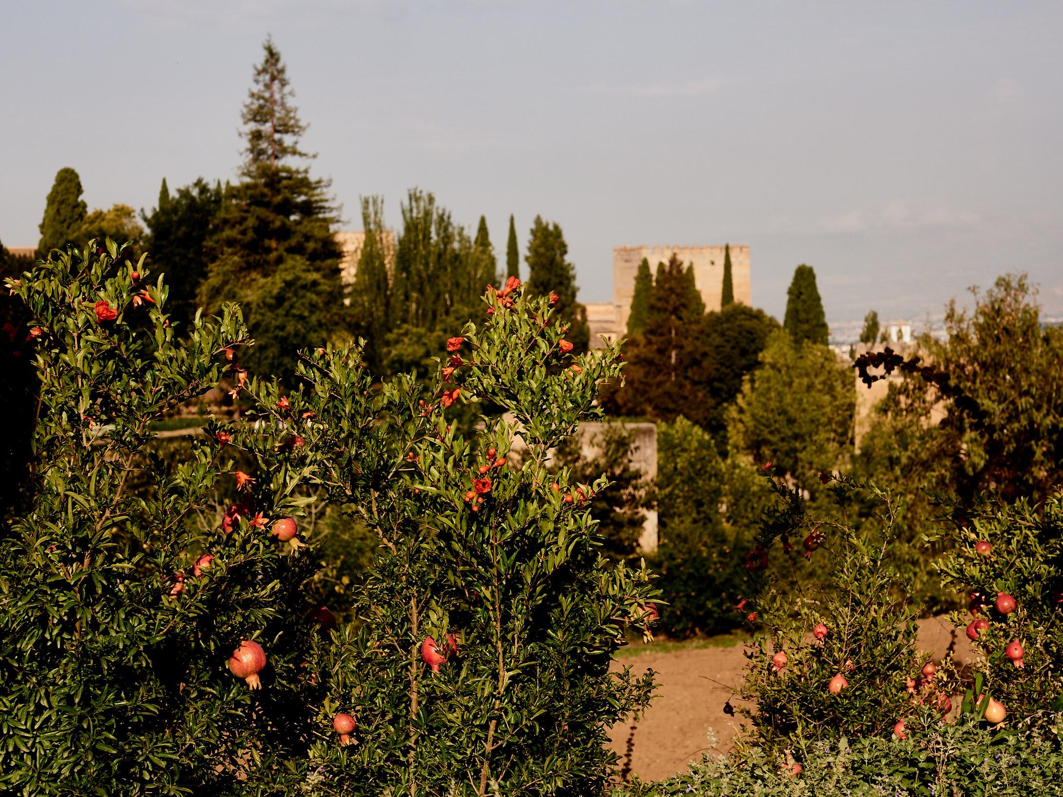 Blick vom Generalife auf die Alcazaba