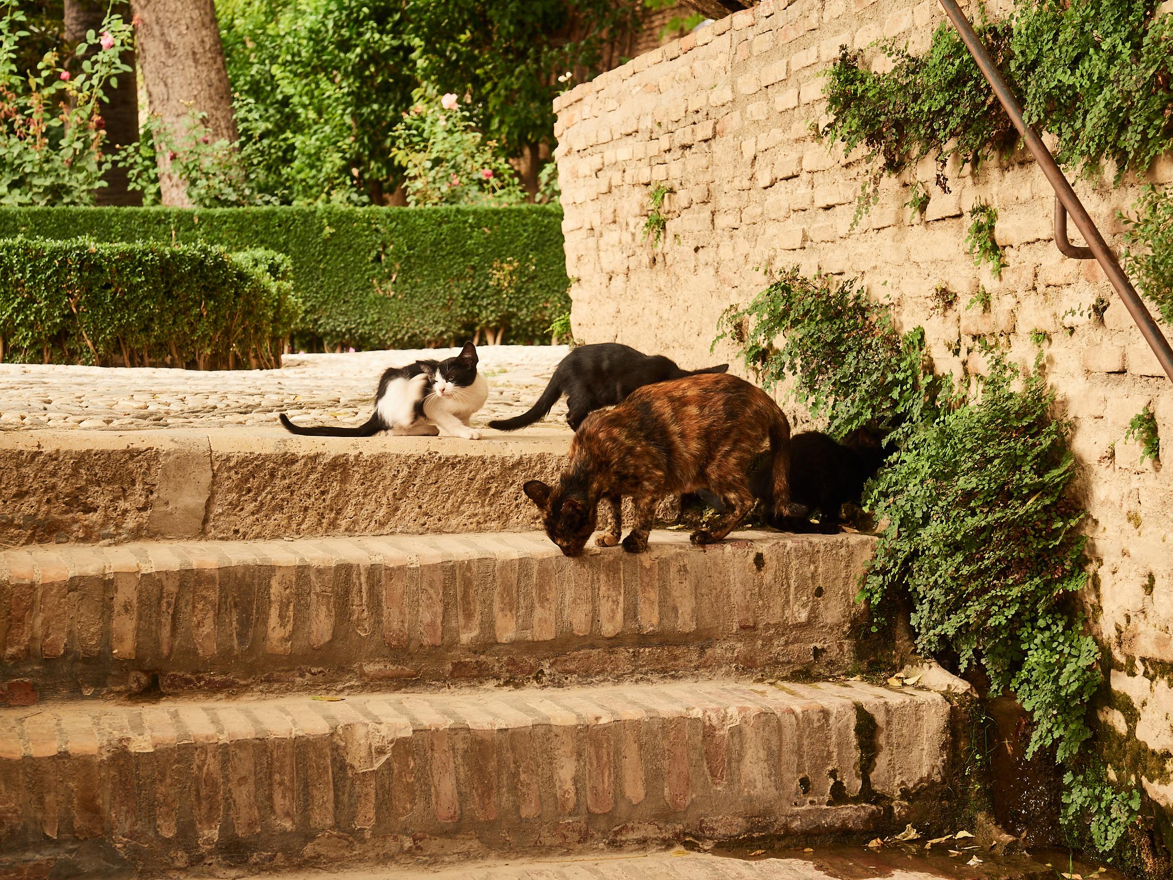 Alhambra-Katzen